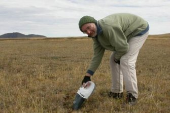 Botanist Neville Walsh collecting seeds of rare snow daphne with a dustbuster as part of a conservation program.