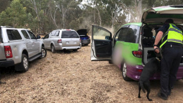 Police using a detection dog search cars at Rainbow Serpent Festival for drugs.