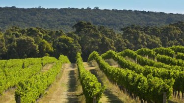 Vineyards at Cape Mentelle are some of the oldest in the Margaret River region.