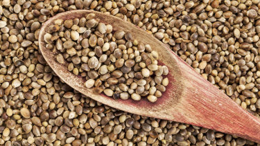 Hemp seeds.... highly nutritious, but some parents are still concerned.