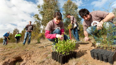 Tree planting and other environmental programs can inject cash into the economy.