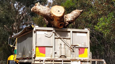 A picture of the tree being removed from site.