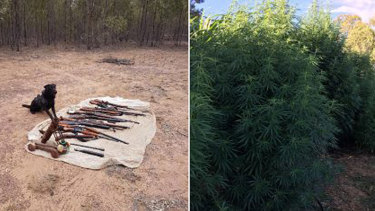 Queensland police unearthed firearms and discovered a cannabis plantation.