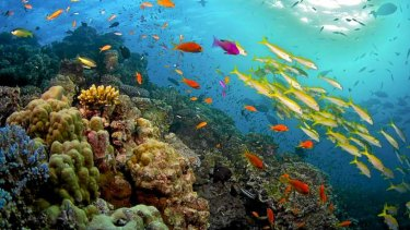 The contentious Great Barrier Reef Foundation grant is to be spent on projects such as water quality improvements.