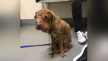 Marvin at the vets.