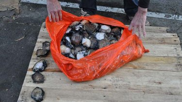 The men were picked up for possessing over 400 abalone.