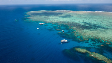 The bright and beautiful Norman reef  in Great barrier Reef, Cairns.