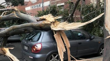 A tree on a car in Munster Terrace, North Melbourne.