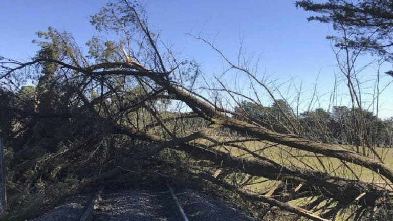 Strong winds blew this tree down onto the railway line between Bacchus Marsh and Ballarat, suspending services for several hours.