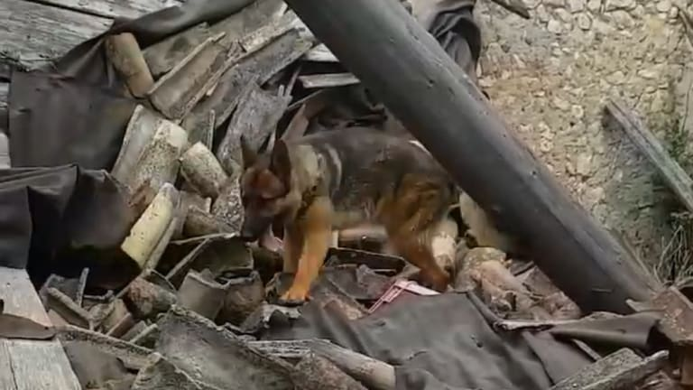 Kaos on a search mission from a video by his owner Fabiano Ettore.