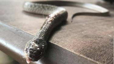 LNP MP Mark Robinson posted a warning about snakes on Sunday night after he said he was attacked.