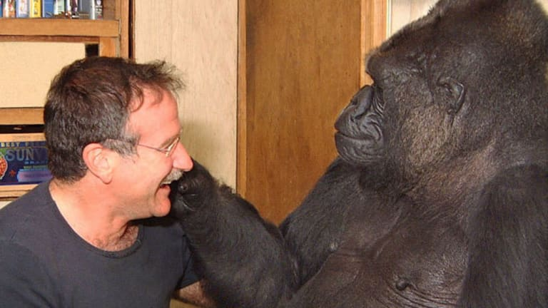 Robyn Williams and Koko had a special bond.