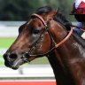 Randwick baptism of fire makes a Welly favourite of Emilette