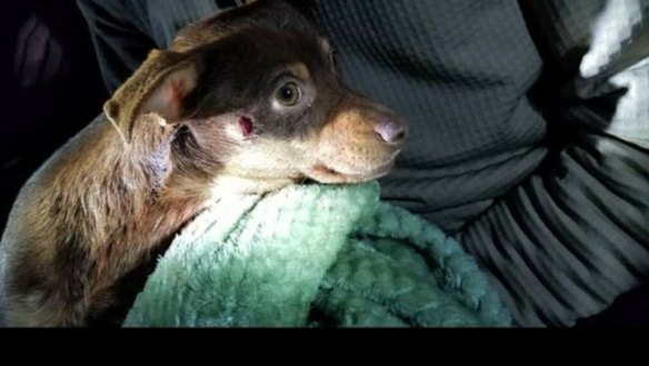 Arkansas sheriff's deputy fired after shooting small dog