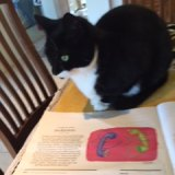 Daisy perusing Paul Connolly.