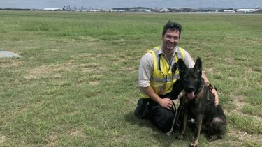 Ozzie and his handler Jackson Ring have been scaring birds away from Brisbane Airport runways for four months now.