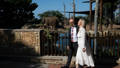Roar, snore and marry: Why 40 couples are tying the knot at Taronga Zoo