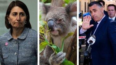 Premier Gladys Berejiklian and Deputy Premier John Barilaro are at loggerheads over policy to protect koalas.