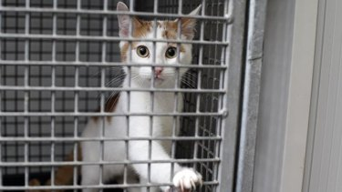 The ACT government plans a raft of tough new animal cruelty laws, with fines of $3200 for leaving an animal in a car.