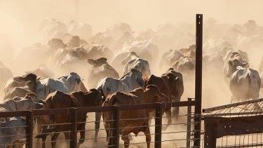 Live cattle exports are on track despite the coronavirus outbreak.