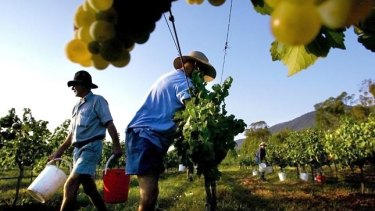 Rural Funds Group assets include vineyards leased to Treasury Wine Estates.