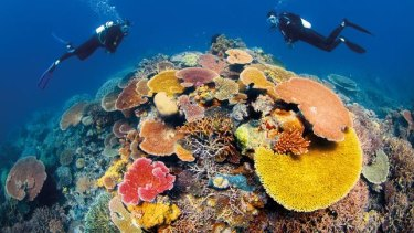 Australia's environment and science ministers begin to report to UNESCO in November 2019 on the past five-years of protecting the world-heritage listed Great Barrier Reef.