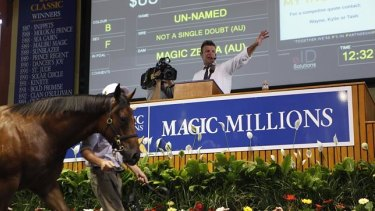 The Magic Millions sale continues to go from strength to strength.