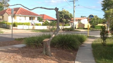 A tree after it was pruned by Energex contractors on Partridge Street, Inala.