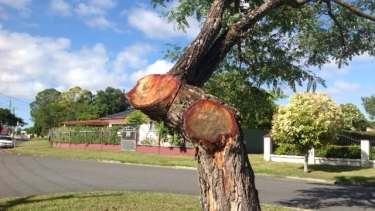 A tree on Hickory Street at Inala that was cut back by Energex contractors