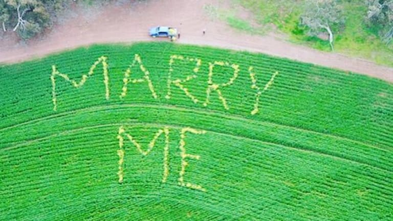 The massive proposal was made with canola in a wheat field.