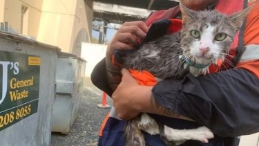 Bandit the cat was rescued from the Brisbane River by eagle-eyed contractors working on the Indooroopilly Riverwalk.
