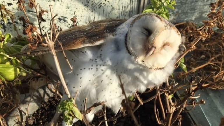 A dead owl found by landowners near Gormans Road in Killarney.