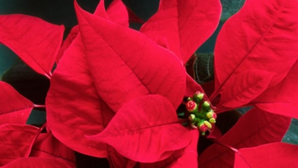 As Christmas marketing ramps up, dread of isolation can too