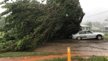 Trees were blown down as Cyclone Trevor crossed far north Queensland earlier this week. It will re-strengthen in the Gulf of Carpentaria.