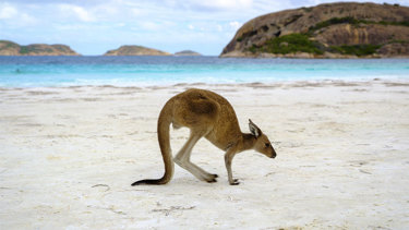 Lucky Bay in Cape Le Grand National Park