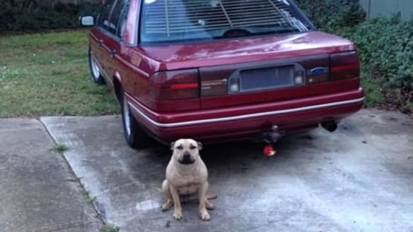 Fatal attack: What made this loyal dog turn on its owner?