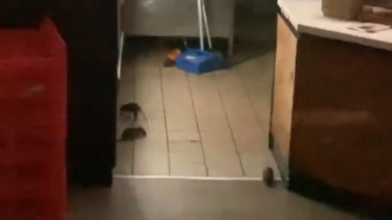 Oporto Broadway closes after rat infestation video emerges
