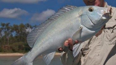 The blue bastard fish.