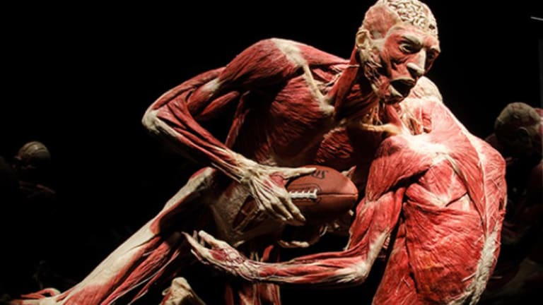 An emotional experience\': Human bodies laid bare in Melbourne exhibition