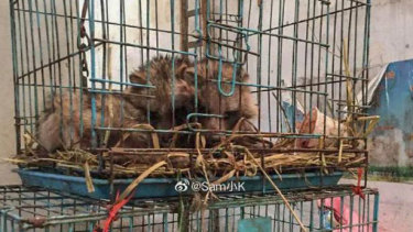 Images circulated online of wildlife allegedly sold at the Wuhan seafood market before the coronavirus outbreak in the city.