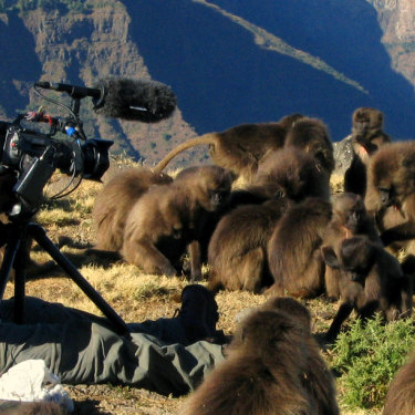 Queensland filmmaker Chadden Hunter's photos across his time working with David Attenborough on shows including Frozen Planet and Planet Earth.