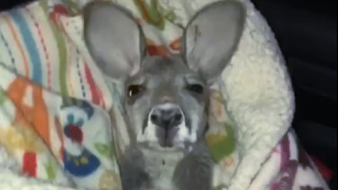 'Scooby-Roo' as pictured by an officer of the Norwood police department.