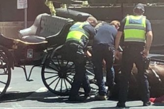 A photo taken by activists of a horse that fell near Crown Casino in February, 2018.