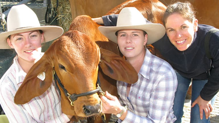 The Brisbane Ekka 2009 opened today at the RNA Showgrounds.
