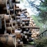 Forestry industry in limbo as Andrews stalls timber release plan