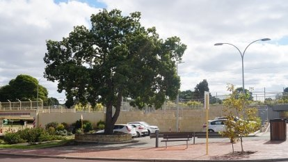 State to wrest control from Bayswater, Kalamunda councils' Metronet areas