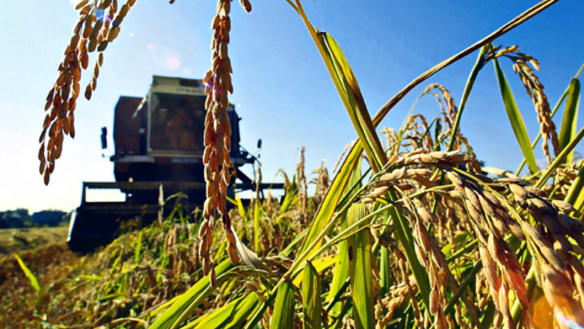 'Worst-ever drought' hits major agrigroup Nufarm