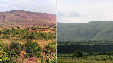 Tree regeneration near Humbo in Ethiopia.