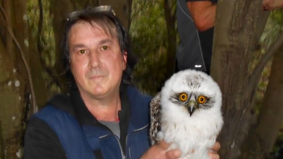 Powerful friends in low places rescue and release disoriented owlet