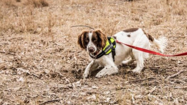 A Queensland Urban Utilities detection dog identified a tracked underground water leak.